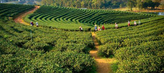 Assamese-featured-image